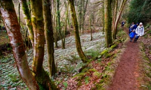Snowdrop Valley near Wheddon Cross on Exmoor, Somerset