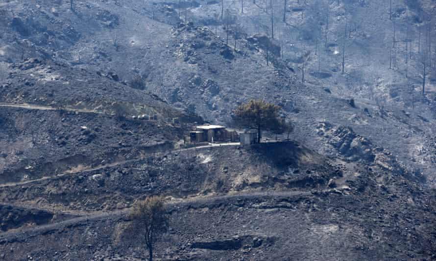 A burned mountainous area in the Larnaca region.