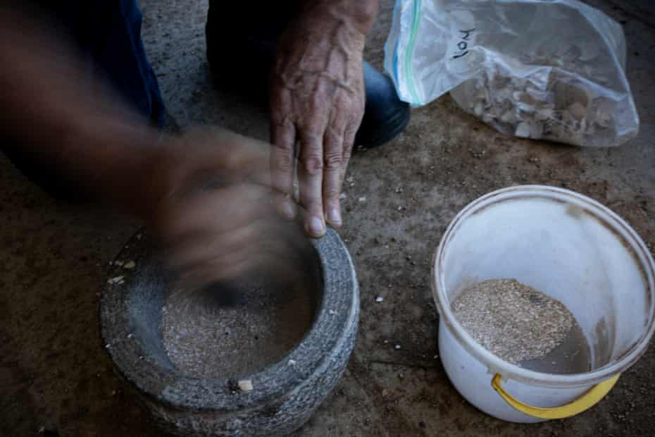 A mixture of egg shells and basalt is used to produce biodynamic fertiliser, which will be placed in a cow horn and buried in the earth.