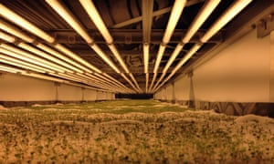 World S Largest Vertical Farm Grows Without Soil Sunlight border=