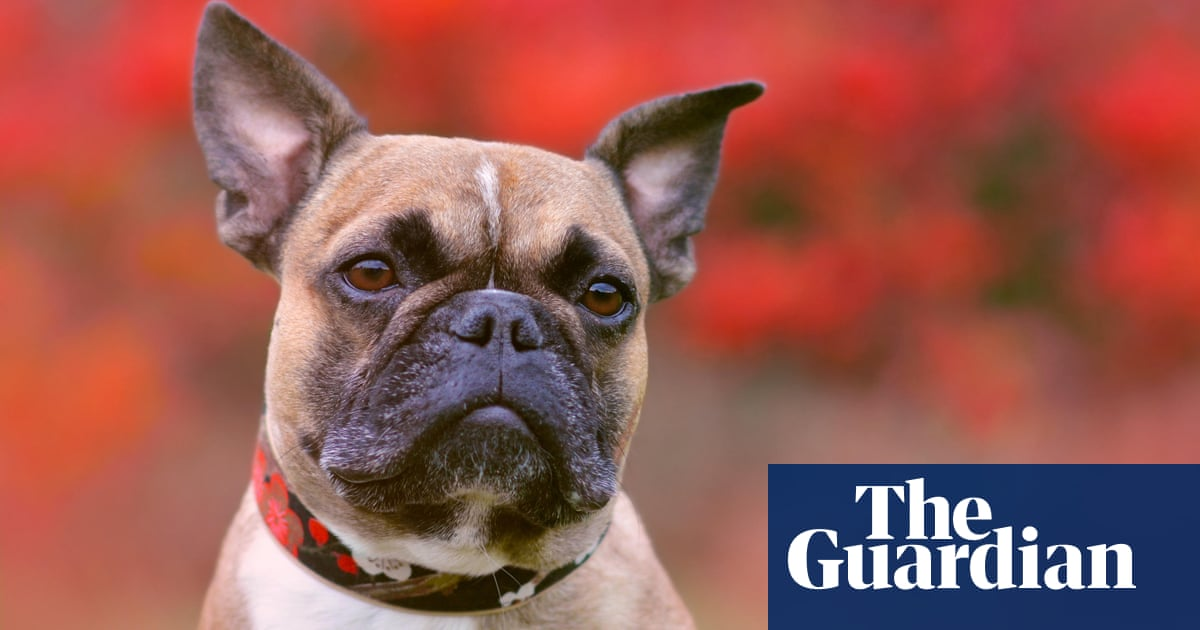 UK dog owners warned about thieves staking out parks and luring puppies