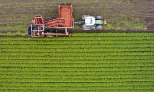 Harvesting of organic carrots in Germany.