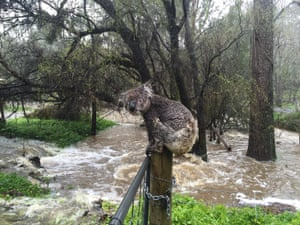 When floods hit South Australia in September, thousands were left without power and sand bags were needed to protect homes. The wild weather even included twin tornadoes. This rain-soaked koala perched on a gatepost amid the floodwaters became a viral star. Named 'Jimmy', he was photographed by local resident Russell Latter.