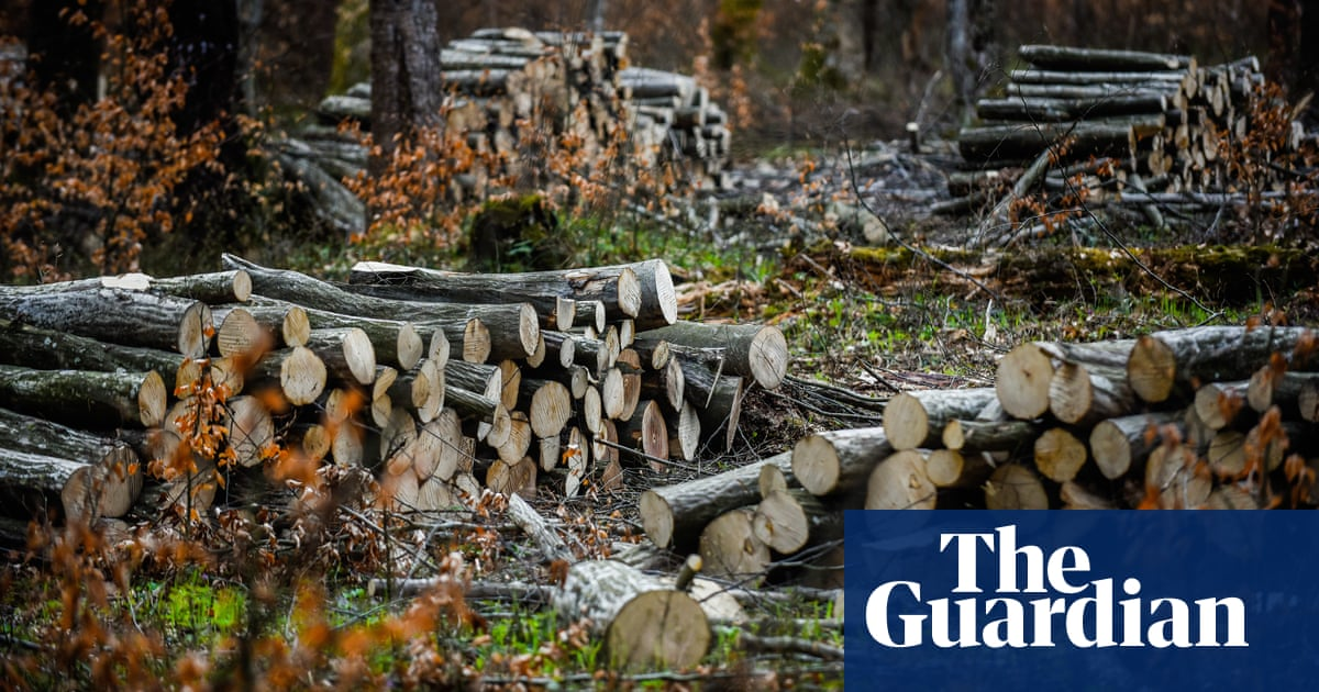 UK banks' support for deforestation firms topped £900m last year