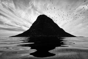 Runner-up, birds: Reflection of a bird cliff