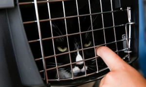 Haley Joiner picks up her cats, Odin and Merlin, from a temporary shelter.