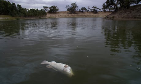 The Darling River fish kill is what comes from ignoring decades of science