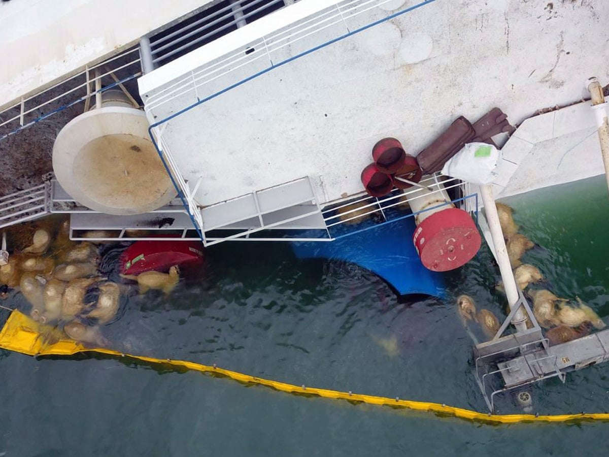 Secret decks found on ship that capsized killing thousands of sheep |  Romania | The Guardian