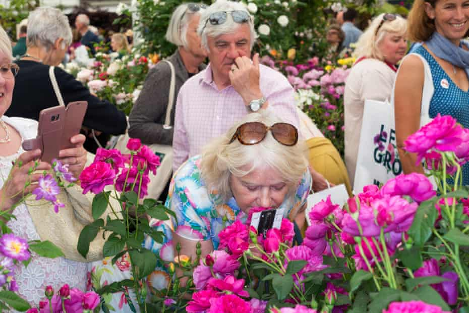 People sniffing pink roses