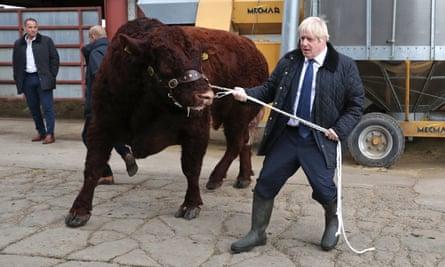 Boris Johnson handles a bull during his visit to Darnford farm in Banchory, near Aberdeen.
