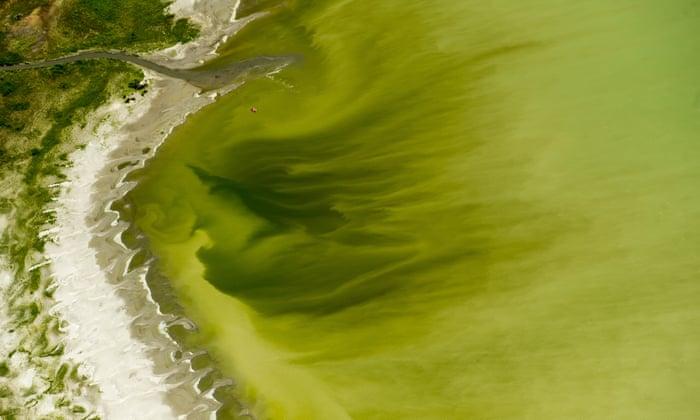 Huge toxic algae bloom sickens more than 100 in Utah amid