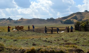 Workers near Chitu in the Oromia region