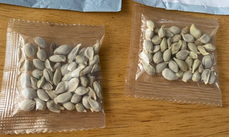 Packages of unidentified seeds that appear to have been mailed from China to US postal addresses.