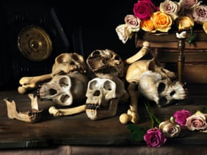 Chimpanzee skulls