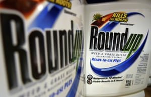Monsanto has long argued that Roundup is safe and not linked to cancer.