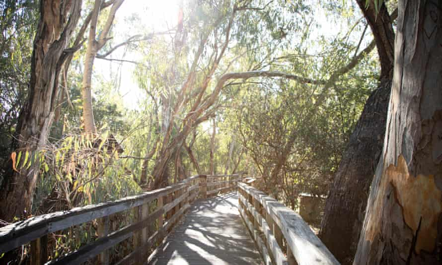 The butterfly grove at Natural Bridges state beach in Santa Cruz.