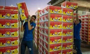 Workers stack bananas for shipping at Santa Marta port.
