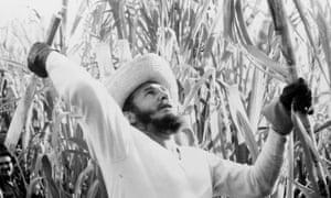 Fidel Castro cuts sugar cane in Cuba in 1961.