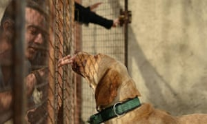 A dog is cared for at the Maryam Sanei hospice
