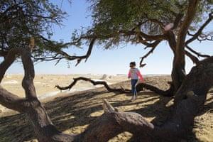 A girl walks near an El Santa tree