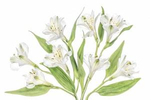 Winner, The Beauty of PlantsCambridgeshire, England
