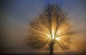 The sun shines behind a tree on a foggy day in Gadebusch, Germany