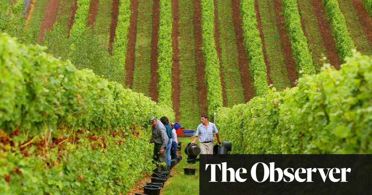 The toast of English vineyards