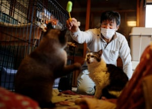Sakae Kato plays with Mokkun and Charm, who are infected with the feline leukaemia virus. Kato looks after 41 cats in his home and another empty building on his property