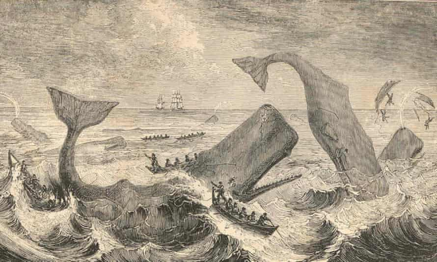 When facing a human attack, sperm whales abandoned the defensive circles used against orca and swam upwind instead.