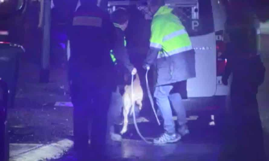 Police put the dog that killed the 61-year-old man into a car