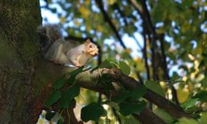 Squirrel, Derby Arboretum