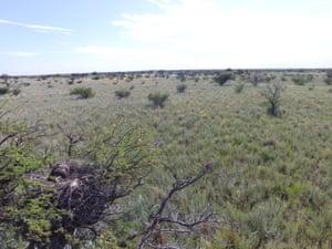 A Chaco eagle nest