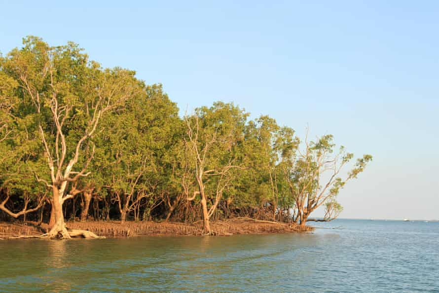 The tropical waters of Darwin harbour