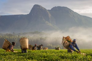 Tea harvesters smile for a photo at sunrise in the plantations surrounding Mount Mulanje.