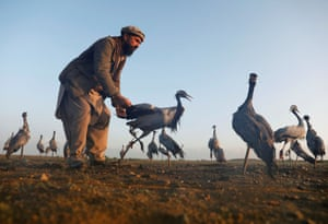 Jan Agha, 49, a 49-year-old Afghan hunter, inspects a crane in a field