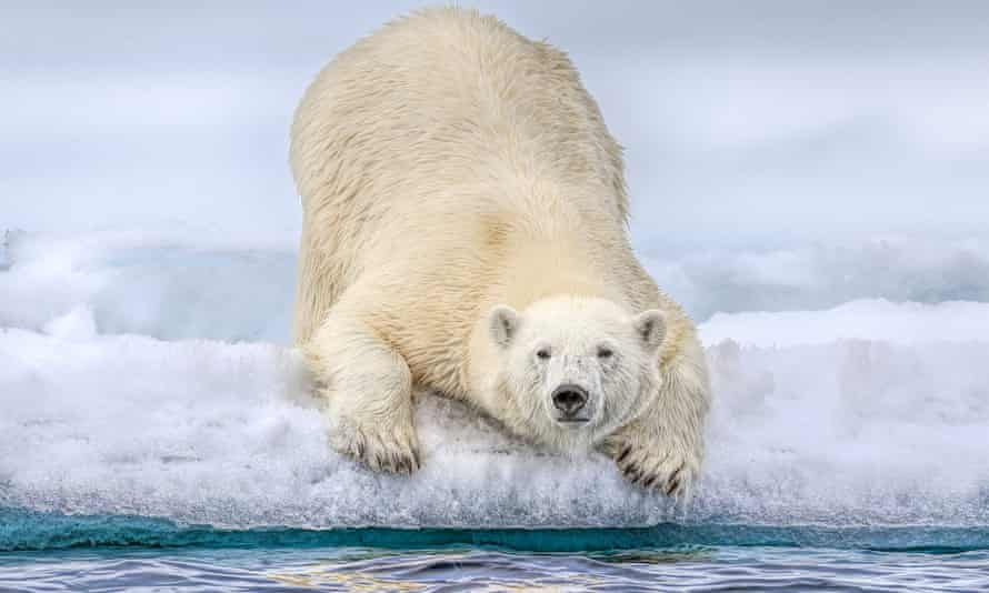 The dependence of polar bears on sea ice means that climate change poses 'the single most important threat to persistence'