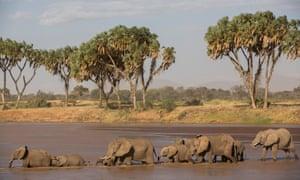 The Samburu National Reserve, elephants in the river