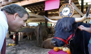 Chris Christie stares down a Scottish highland steer during a campaign stop at the Hopkinton Fair in New Hampshireon Friday.