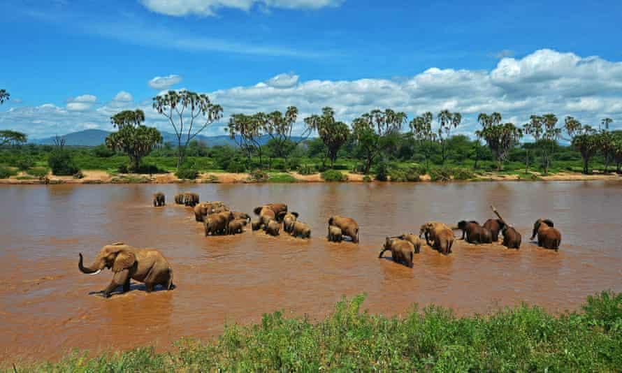 Elephants crossing the Ewaso Nyiro river in Samburu game reserve, Kenya,  on May 8, 2013. AFP PHOTO/Carl de SouzaCARL DE SOUZA/AFP/Getty Images