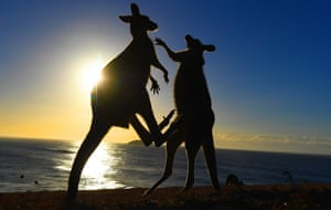 Eastern grey kangaroos fight on Look At Me Now headland in northern New South Wales, Australia