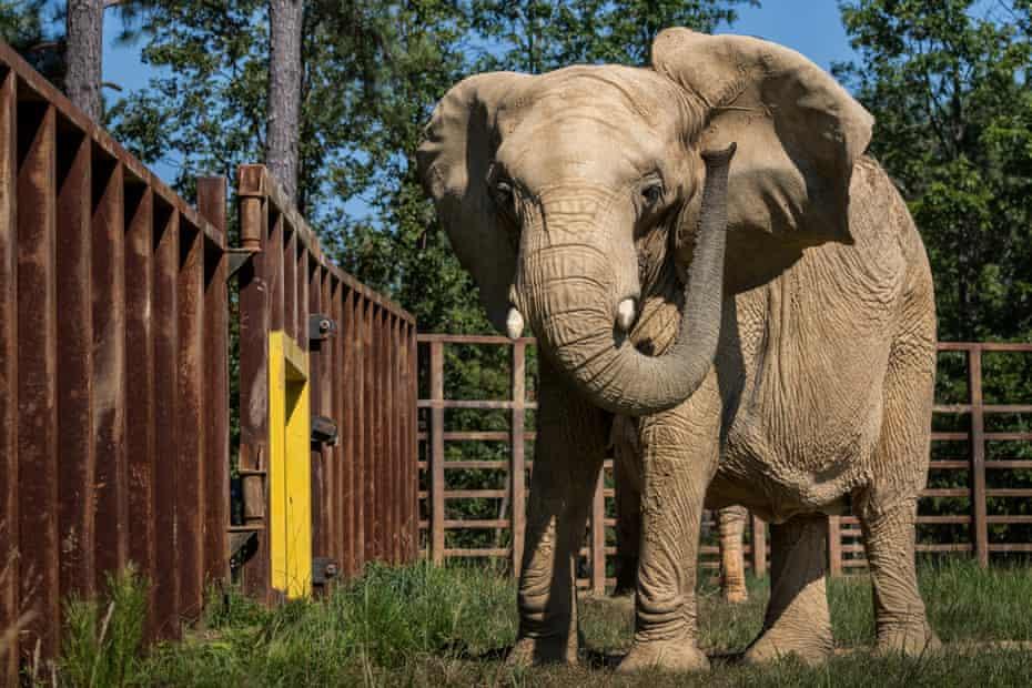 The Elephant Sanctuary, Hohenwald, Hohenwald, Tennessee