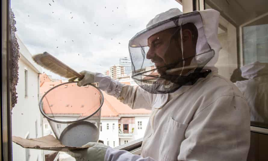 Urban beekeeper Gorazd Trusnovec collects a swarm of escaped bees from a window frame.