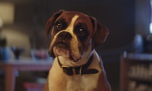 The original John Lewis Christmas advert for 2016 featuring Buster.