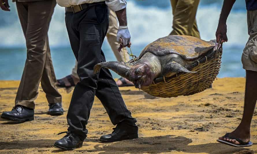 Wildlife officials carry away the carcass of a turtle that was washed ashore at the beach of Angulana, south of Sri Lanka's capital Colombo on 24 June 2021.
