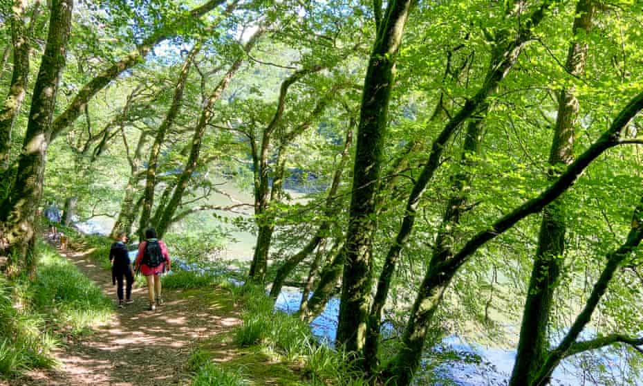 Two hikes walking alongside a wooded estuary, near Looe, Cornwall