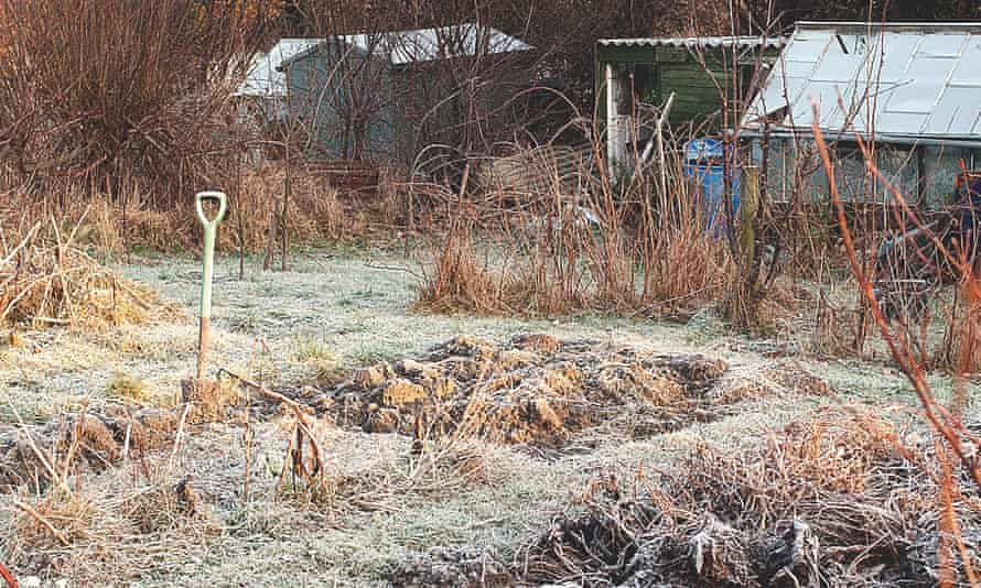 An allotment garden on a cold frosty winter morning,