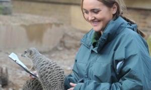 Caroline Westlake, counting meerkats at London zoo
