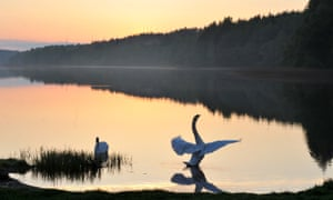 'It is spreading among them, the idea of flight, taking hold as a fire does' … The Maker of Swans