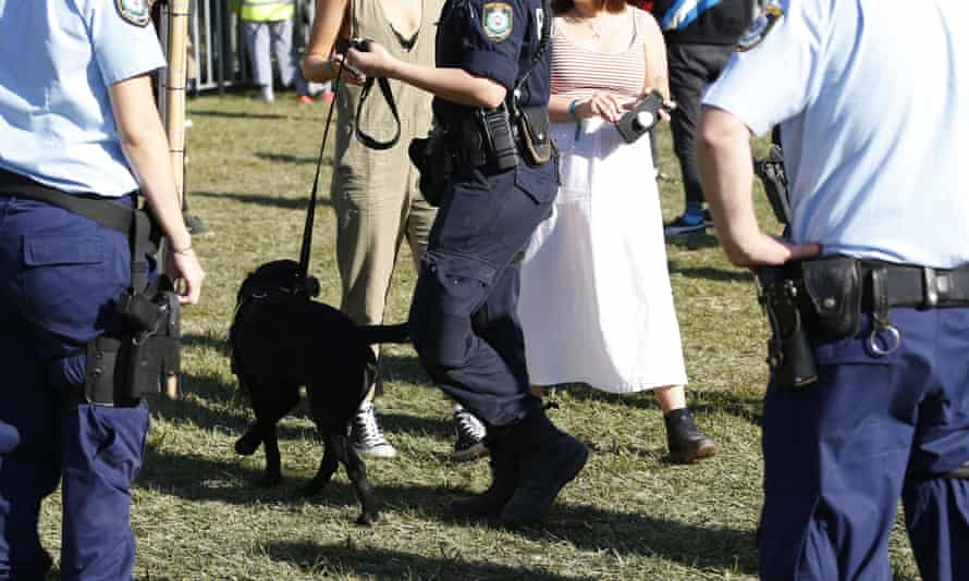 Police dog squad search punters coming in to Splendour in the Grass music festival in Byron Bay, 19 July 19 2019
