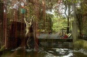 A zoo worker feeds a crocodile in Manila